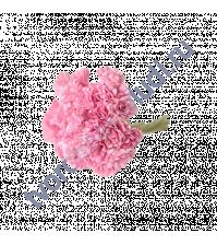 Гипсофилы 10 шт, цвет розовый