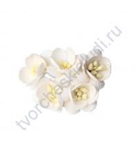 Цветы вишни, 5 шт, цвет белый