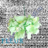 Цветы Лилии нежно-зеленые, размер цветка 3.75 см, 5 шт