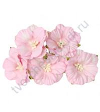 Вьюнок, 4 см, 5 шт, цвет светло-розовый