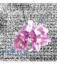 Цветы Лилии сиреневые, размер цветка 3.75 см, 5 шт