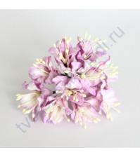 Набор лилий, 5 шт, цвет св. сиреневый