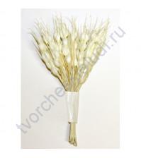 Декоративный букетик Колоски цвет кремовый, 12 веточек, высота 12 см