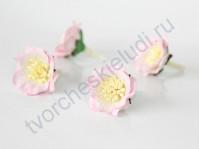 Сенполии 3 шт, цвет светло-розовый с белым