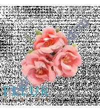 Цветочки Дикие розы нежно-коралловые, размер цветка 4.5 см, 3 шт