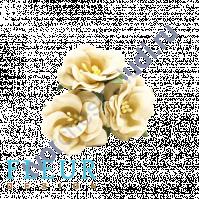 Цветочки Дикие розы кремовые, размер цветка 4.5 см, 3 шт