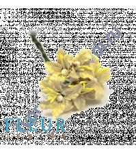 Мини-лилии Кремовые, размер цветка 2.5 см, 5 шт